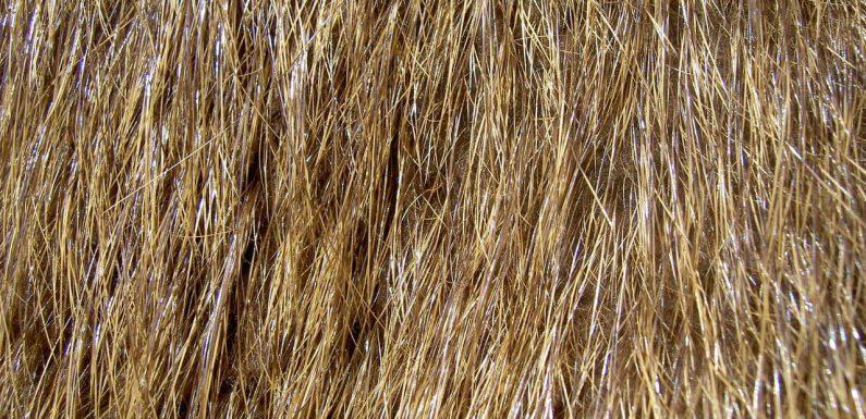 Nie niszcz włosów intensywnymi zabiegami fryzjerskimi