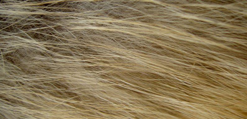 Piękno włosów farbowanych